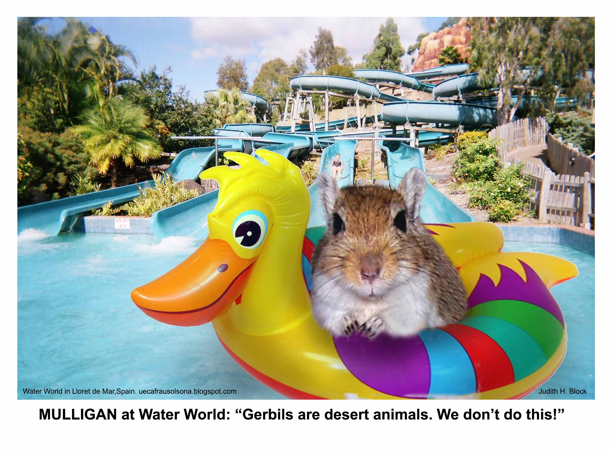 Judith's Gerbil at Waterworld